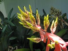 Flowers Cayman Islands