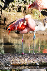 Zoo de Jersey