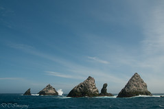 The Shag Rocks