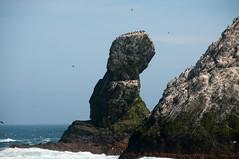 Shag Rocks Detail