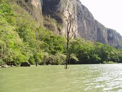 Submerged Tree, Sumidero Canyon