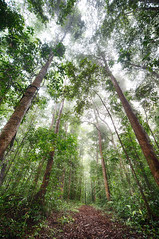 Rainforest Mist
