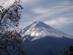 Monte Fuji árbol con frutos