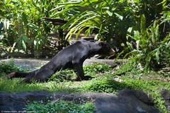 Zoológico de Perth