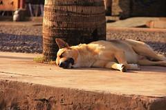 Os Cães da Ilha de Páscoa – 05