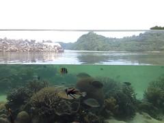 "Palau Aquarium ""infinity pool"""