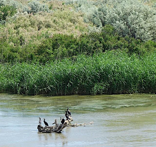 Danube Delta - DSC07394.JPG