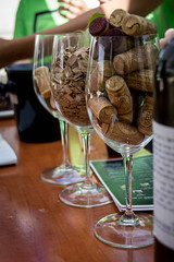 Wine Studies, Open Day at Ariel U.