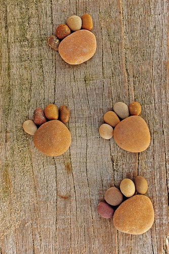 Paw Prints a | by iain blake