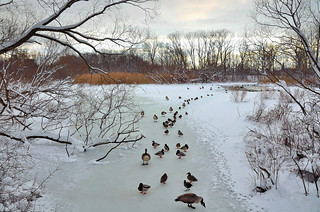 A Bronx View – Getting my Ducks in Order | by Eddie C3