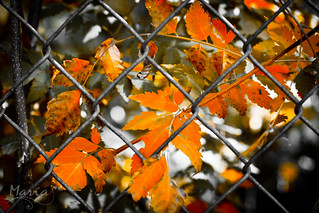 behind the fence | by magova