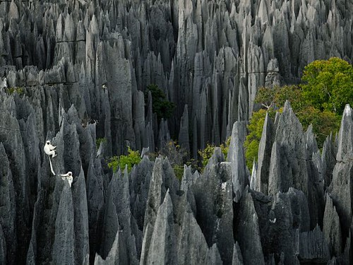 Lemurs, Madagascar by Stephen Alvarez | by NatGeo*