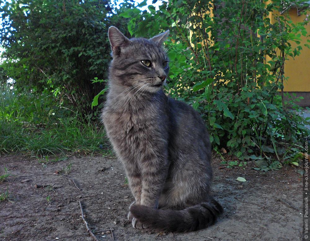 20160529_lutsk_cat_002