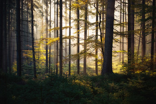 the forest awakens | by Dennis_F