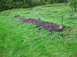 the plot in sept. post turning in compost | by seed house!