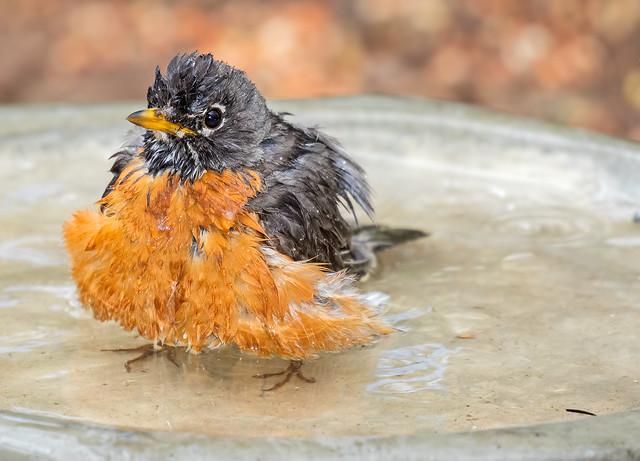Robin-Bath-10-7D2-040716