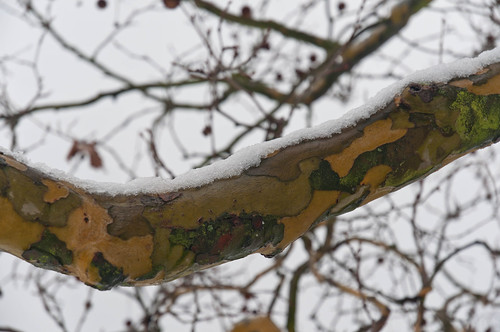 Branch in snow | by Tom Armitage