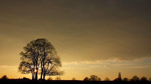 field with trees at sunset | by peet-astn