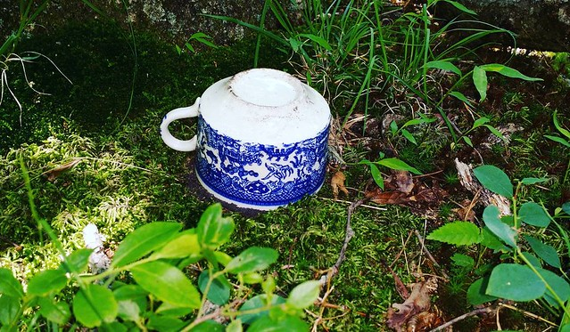 Upended soup bowl in the forest