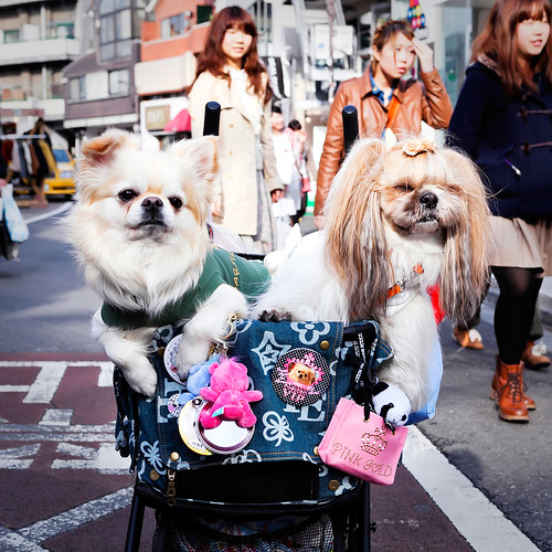 Cute Cat Street Dogs | by tokyofashion