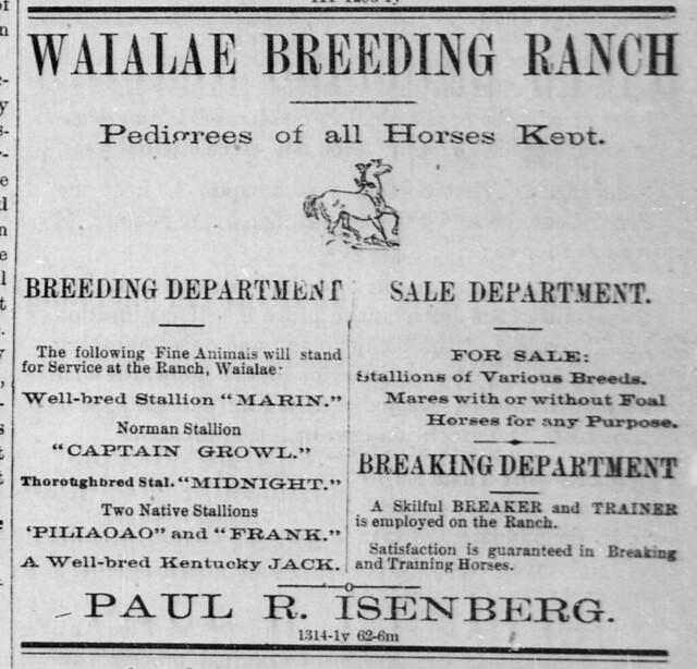 Ad: Waialae Breeding Ranch| Hawaii Digital Newspaper Project http://hdnpblog.wordpress.com/