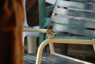 1junco2 mike gordon wc | by Contra Costa Times