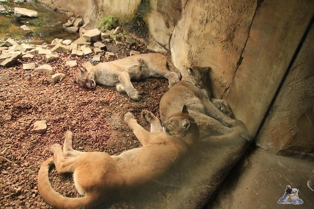 Eisbär Lili im Zoo am Meer 15.05.2016  103
