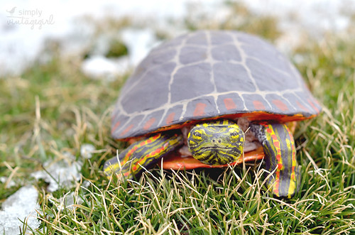 Handmade Turtle | by Simply Vintagegirl