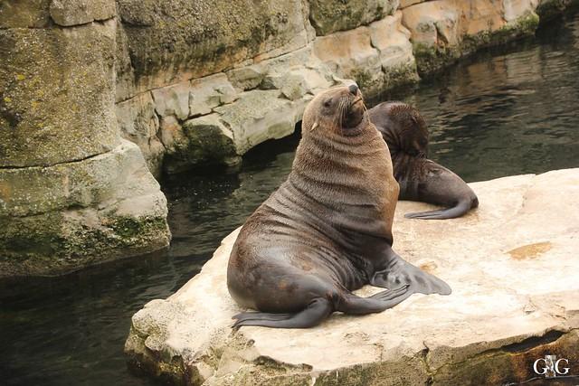 Besuch Zoo am Meer 25.06.201630