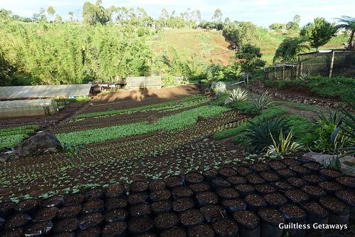 farm-bukidnon.jpg