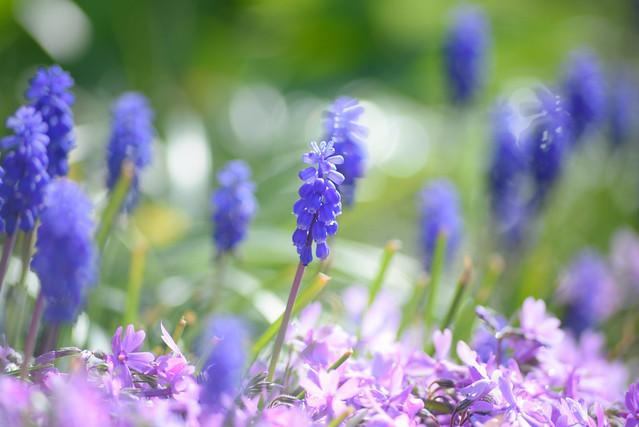 spring flower 5