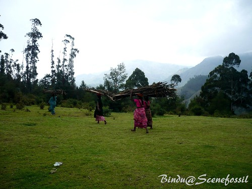 1.Women, forest, firewood, Kodaikanal | by binduroy22