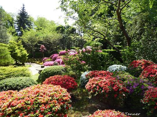 Bonsaigarten Ferch Mai 2016