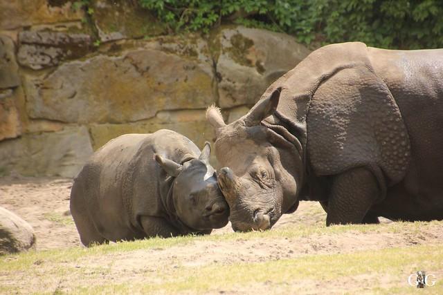 Tierpark Friedrichsfelde 29.05.201654