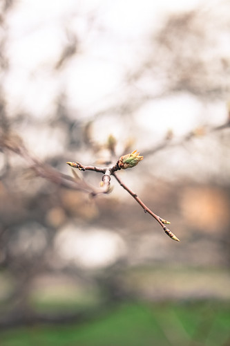 Spring 08 | by Pierre Pocs
