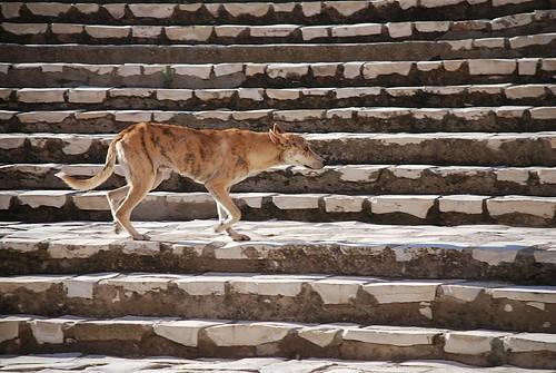 Campaigners Protest Tunisia's Stray Dog Culls
