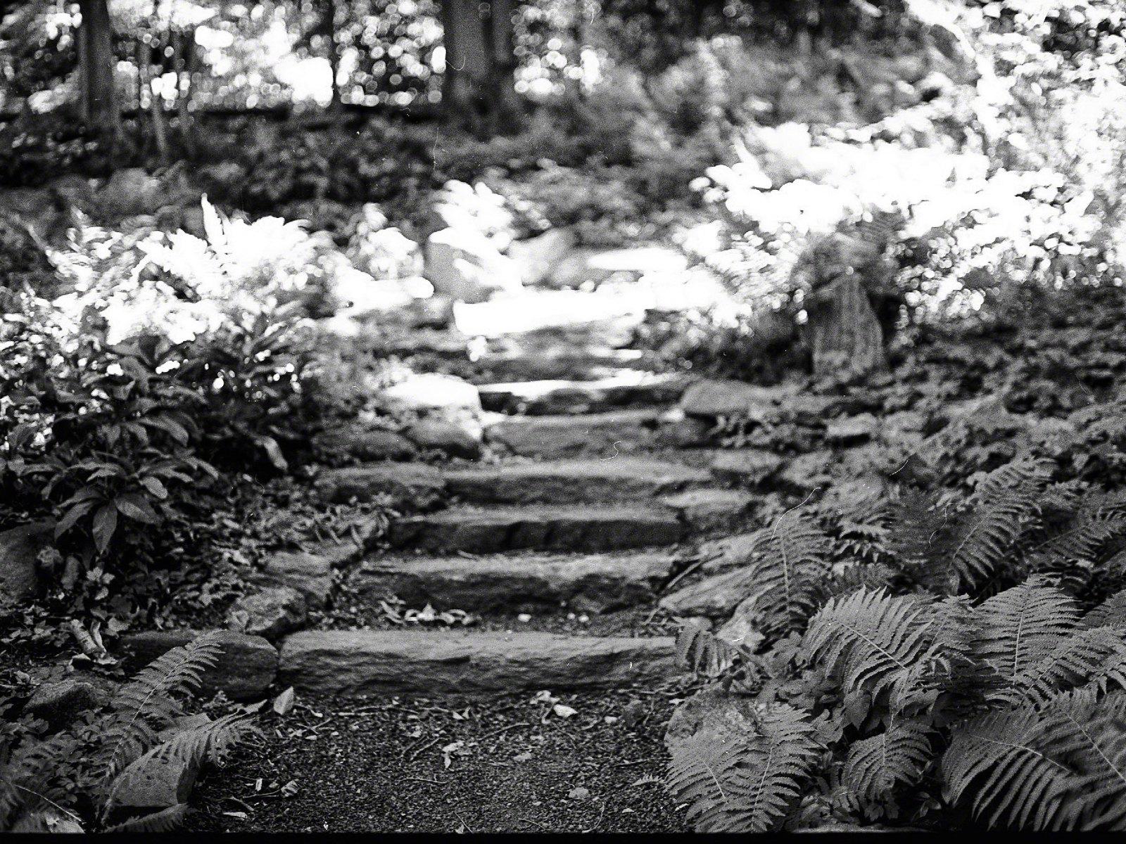 Morris Arboretum_161960018_01