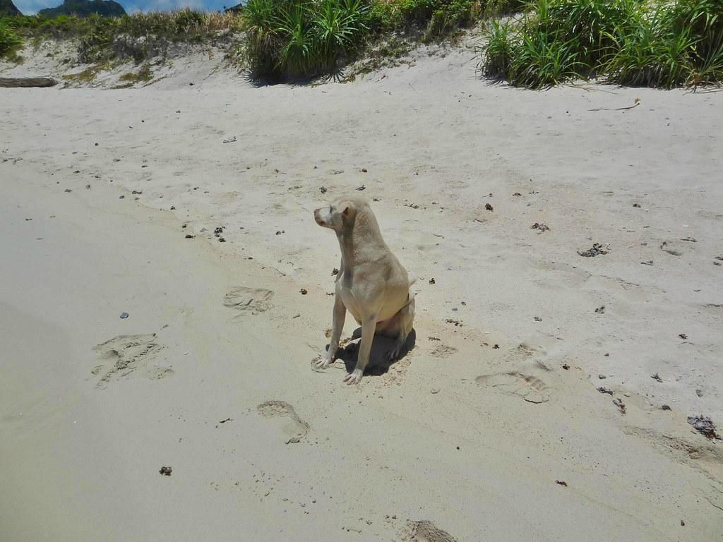 El Nido Dog - Copyright Travelosio