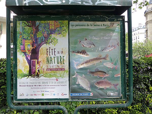 les poissons de la Seine