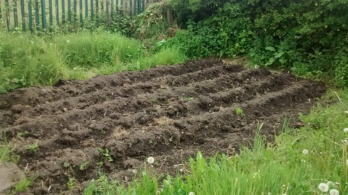 Marley Hill allotment May 16 2