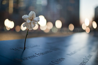 Flower at September 11 Memorial | by pamhule