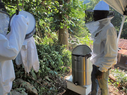apiculture in jamaica Tropical and subtropical apiculture - ebook download as pdf file (pdf), text file (txt) or read book online.
