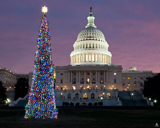 2011 Capitol Christmas Tree | by USCapitol