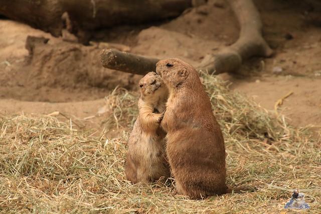 Tierpark Hagenbeck 21.05.2016  0195