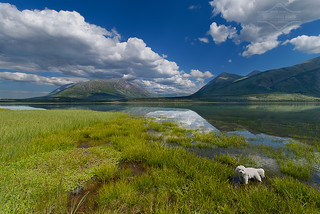 Brandy Goes to Carcross | by kdee64