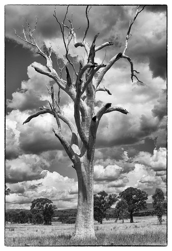 Dead tree | by Denis Fox