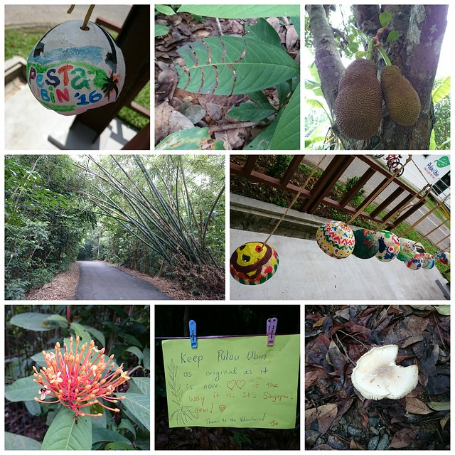 Collage of photos of Pesta Ubin activities by Jo Yap
