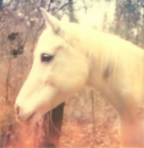 white horse of the woods | by Janelka