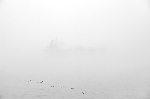 Fog and Pelicans, 3/12 | by OneEighteen