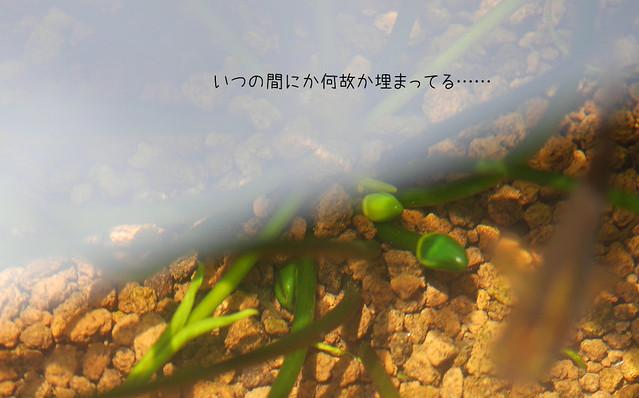 1060x660 ビオトープ観察日誌